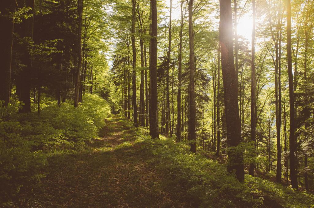 vivid forest path